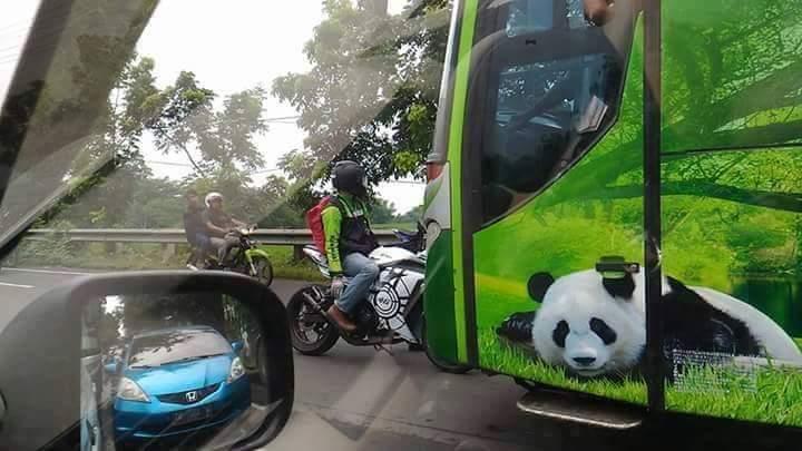 aksi rider ninja 250 hadang bus restu di kertosono tanggal 6 Pebruari 2016