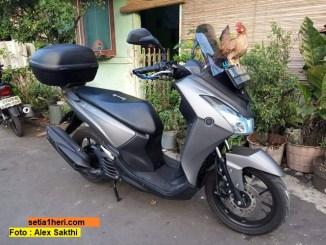 ayam bertengger di jok sepeda motor yamaha lexi