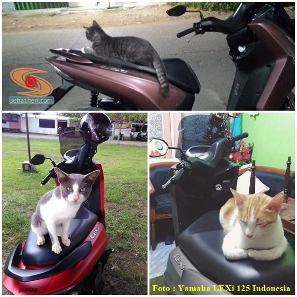 kucing bertengger di jok sepeda motor yamaha lexi