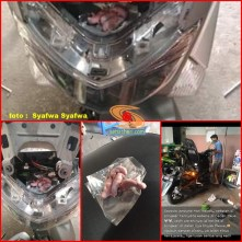 tikus gerogoti kabel lampu motor hingga mati