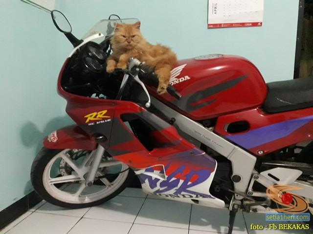kumpulan foto biker dan hewan peliharaan brosis (1)