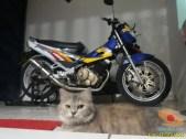 kumpulan foto biker dan hewan peliharaan brosis (11)