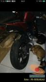 kumpulan foto biker dan hewan peliharaan brosis (13)