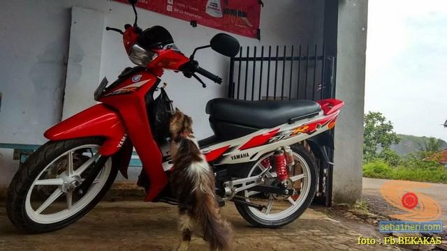 kumpulan foto biker dan hewan peliharaan brosis (14)