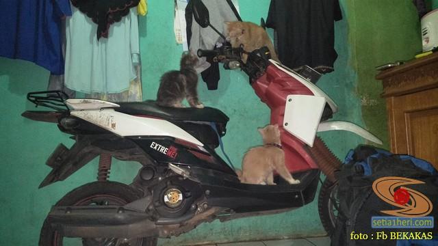 kumpulan foto biker dan hewan peliharaan brosis (18)