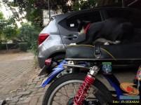 kumpulan foto biker dan hewan peliharaan brosis (7)