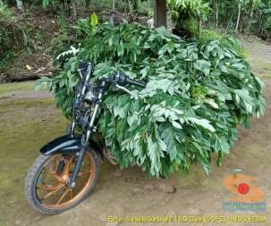 Kumpulan gambar Suzuki Satria Fu buat boncengan barang gans.. (2)