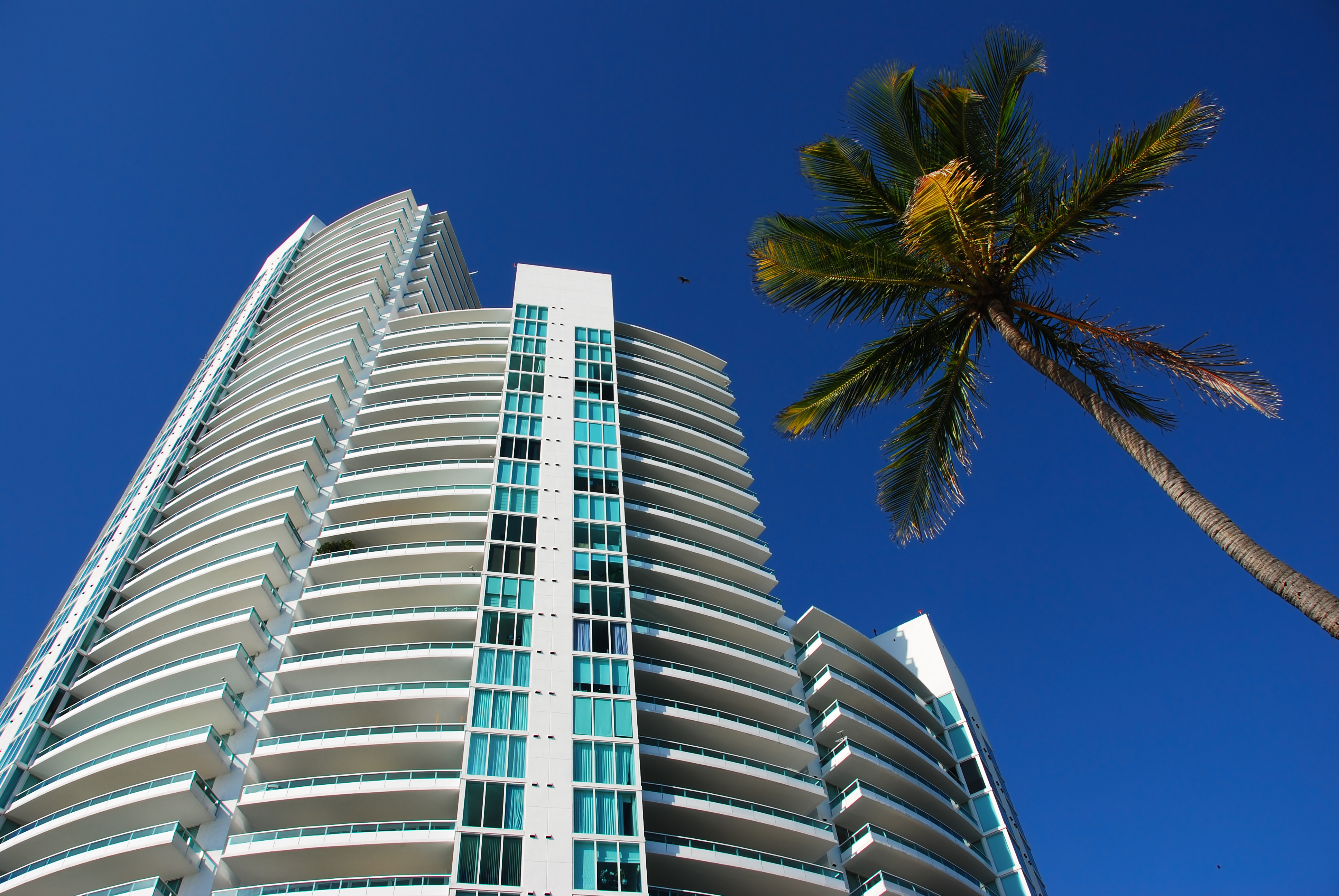 tall-condo-building-with-palm-tree