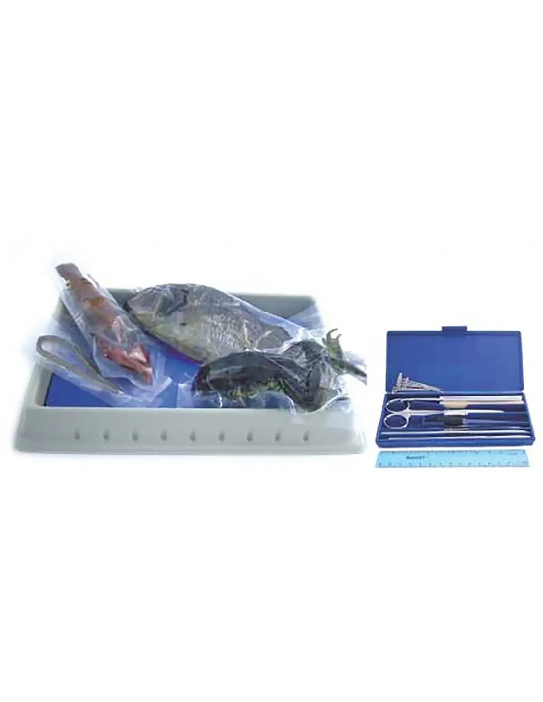 hight resolution of Biology Dissection Kit (with specimens)