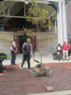 Biology Club Vice President Abby Gillis shovels dirt onto the tree dedicated to Suzanne Rogers on Oct. 12.