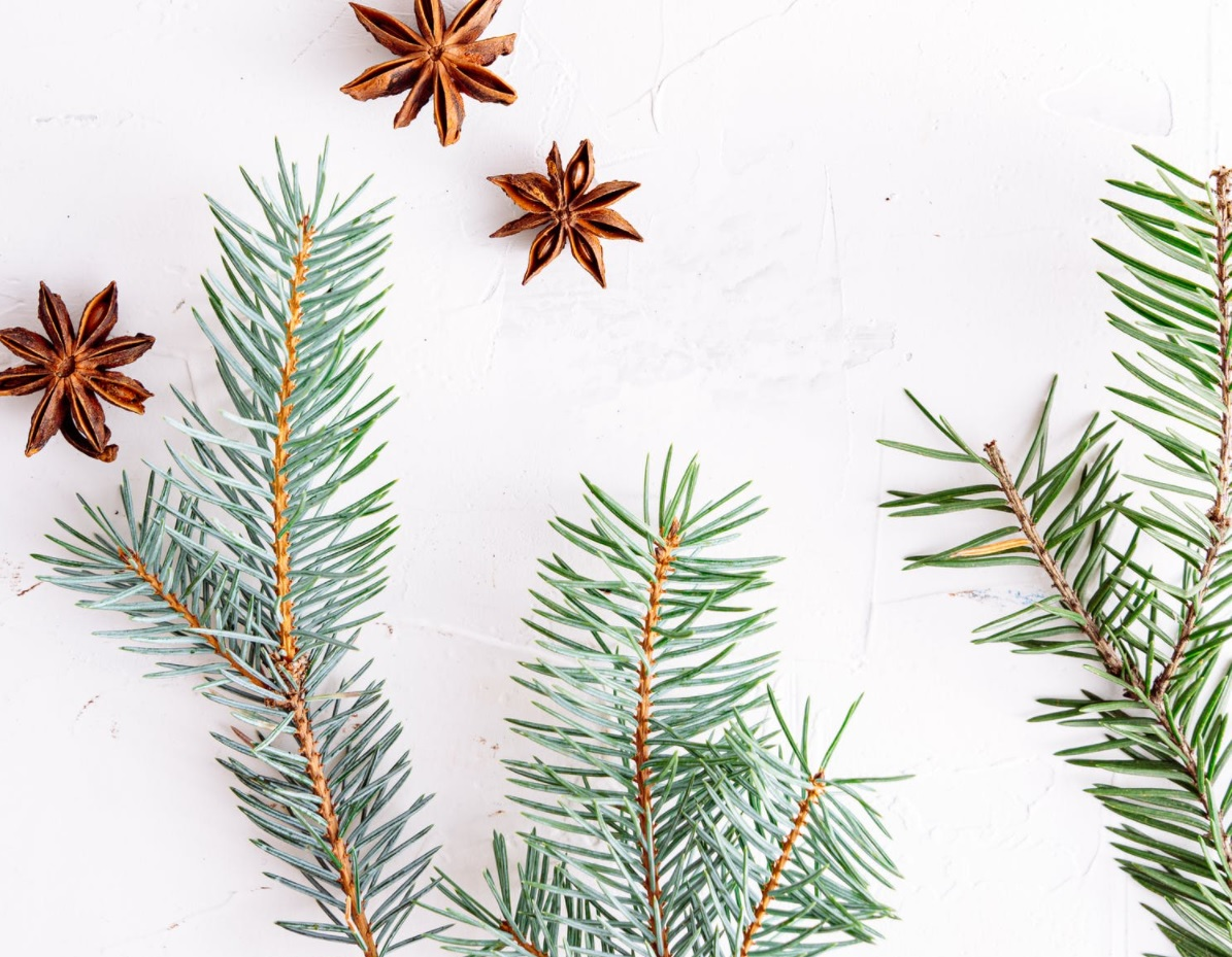 Tips and Tricks to Reduce Your Waste This Christmas