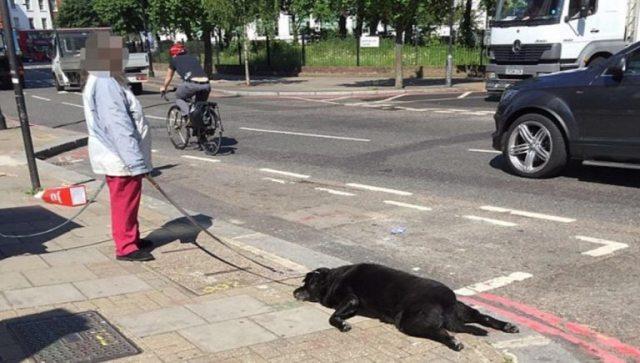 Mujer arrastró a su perro y después lo abandonó