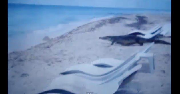 Capturan a cocodrilo que fue visto en playa de Cozumel