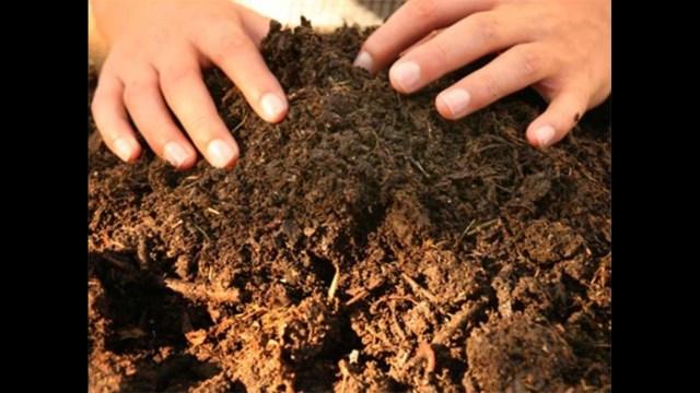 Crean bolsas ecológicas que ¡se biodegradan en compostas!