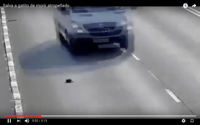 VIDEO: Salva a gatito de ser arrollado en carretera