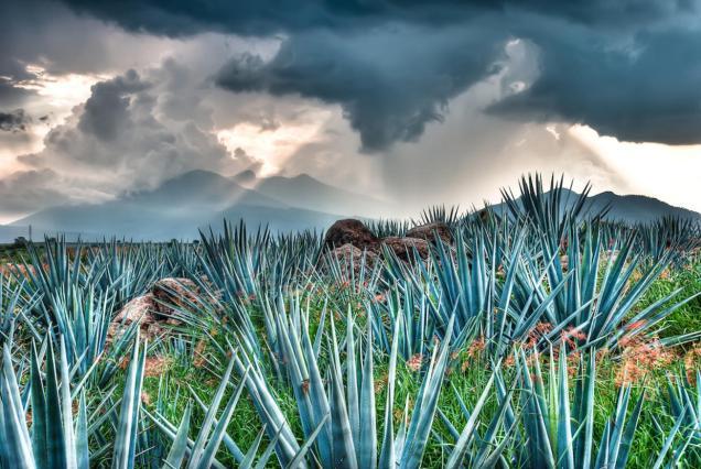 La Feria Nacional del Tequila se celebra del 30 de noviembre al 12 de diciembre. Foto: benolivares.photoshelter.com