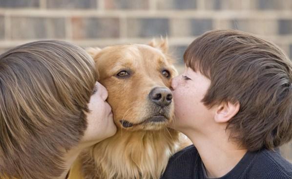 Crece número de personas que incluyen a mascotas en planes de desastre