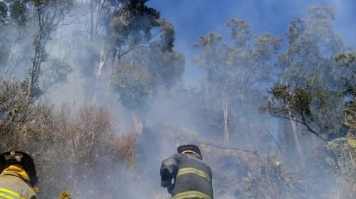 Sofocan Bomberos de Toluca incendio en el Cerro La Teresona