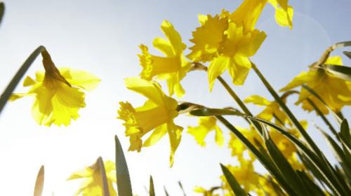 Llegó la Primavera