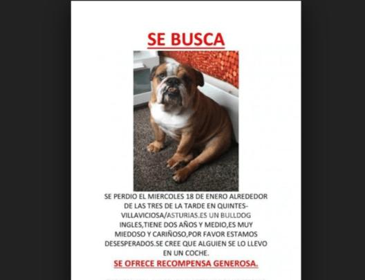 Incrementa en México el secuestro, robo y tráfico de perros