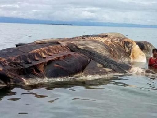 Encuentran enorme cadáver y nadie sabe de qué animal se trata