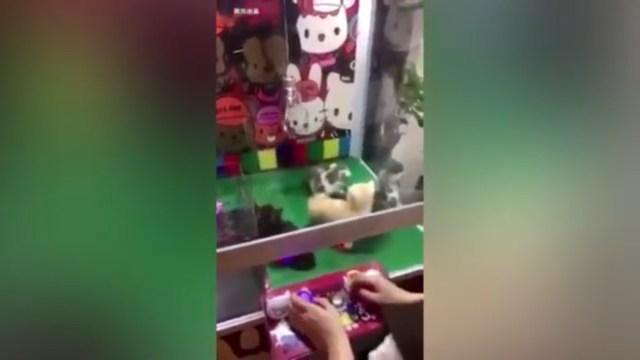 VIDEO: Maquina de gancho ofrece gatos como premios