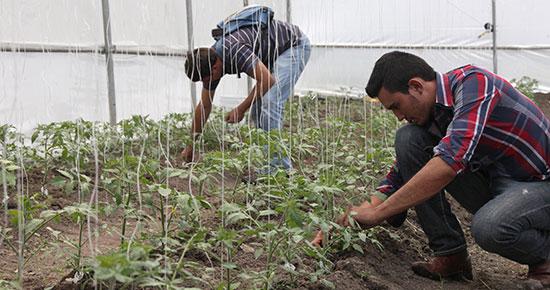 Segunda Convocatoria de Ingreso UAEM ofertará carrera de Técnico Superior Universitario en Arboricultura