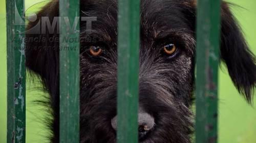 Sanos y salvos los perros que presuntamente atacaron a vecinos de Toluca