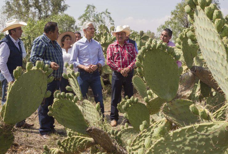 Visita gobernador centro de acopio para fortalecer la producción y comercialización de nopal mexiquense