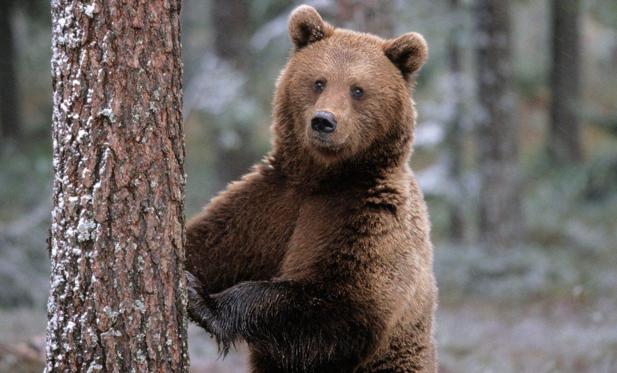 Niño perdido en el bosque sobrevive gracias a la ayuda de un oso