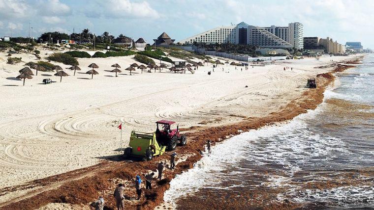 El caribe mexicano el paraíso del sargazo