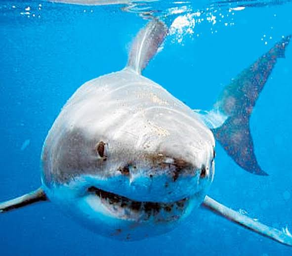 Niña es atacada por tiburón en playas de California