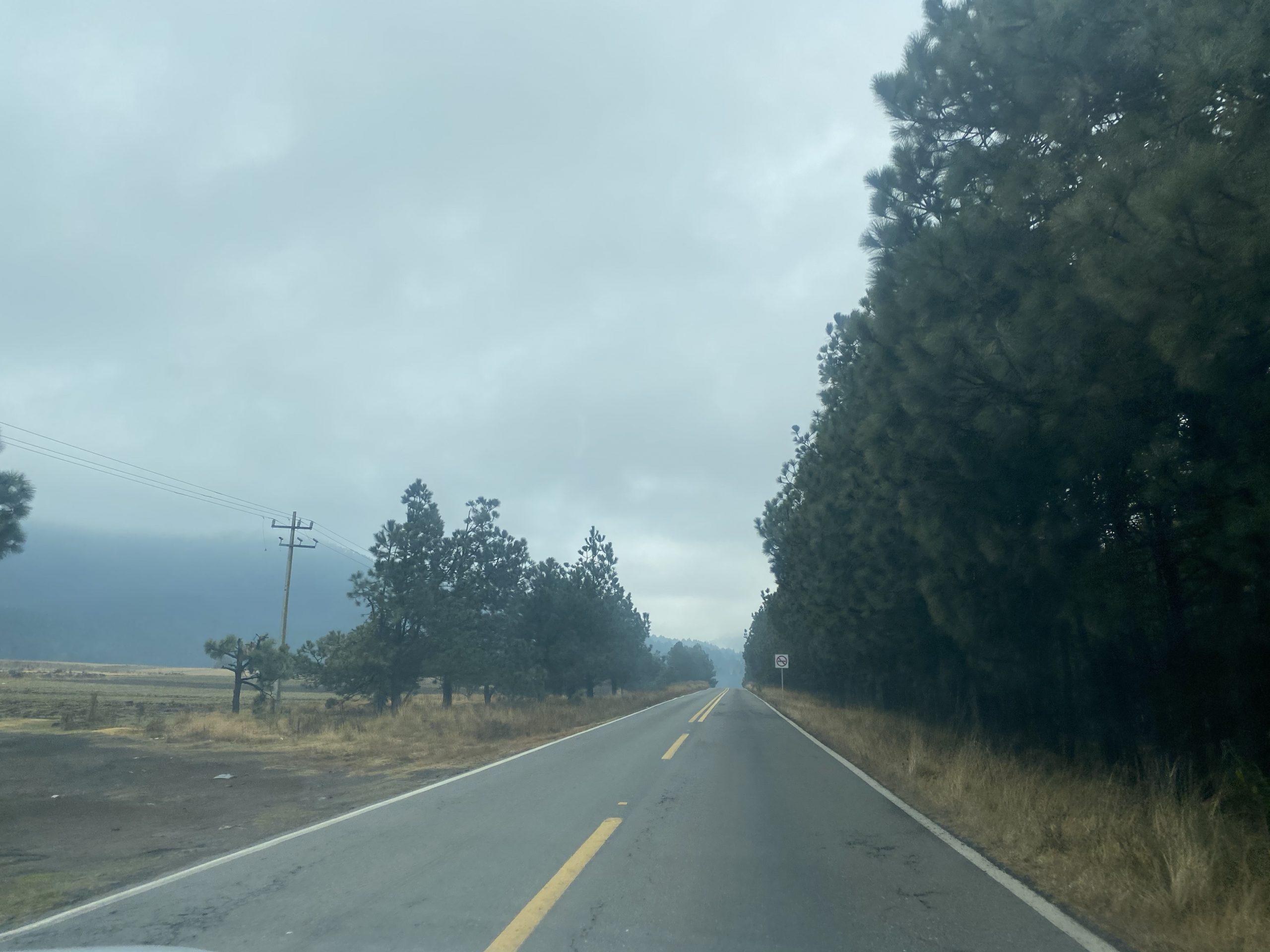 Buscan a felino que mató a un hombre en Valle de Bravo
