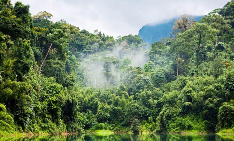 Más de 8 mil árboles serán derribados en la primera fase del Tren Maya