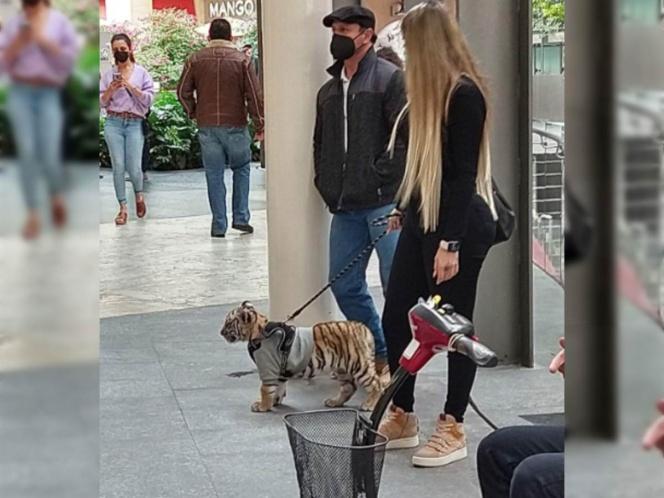 Captan a mujer paseando con cachorro de tigre en Antara
