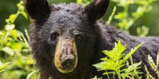 #Video oso es captado tocando el timbre en California