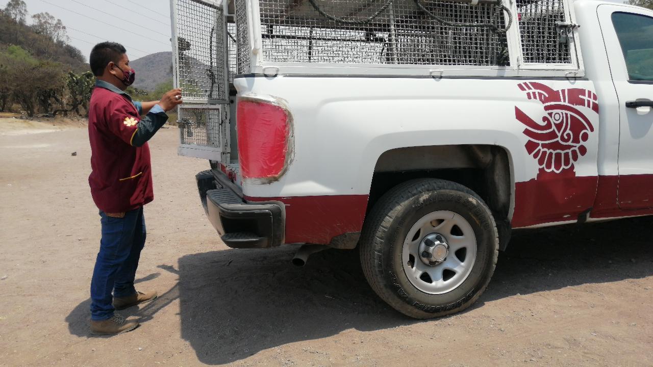 Autoridades de Ecatepec realizan operativos para evitar envenenamiento de perros