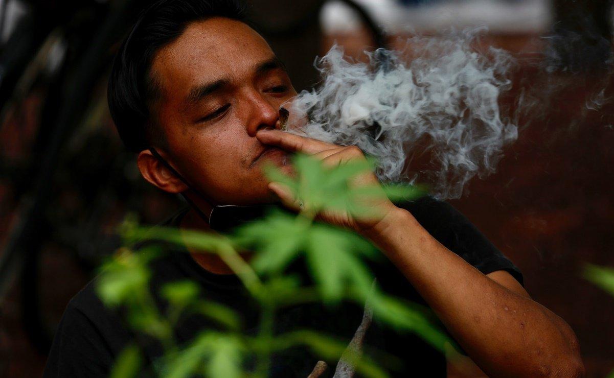 ¡Histórico! Corte anula prohibición del uso lúdico de la marihuana en México