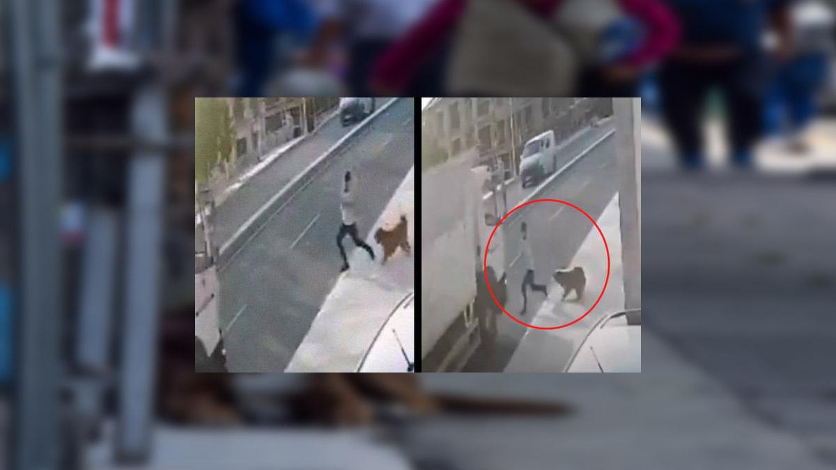 ¡Ouch! Perro asusta a sujeto y termina arrollado por un camión