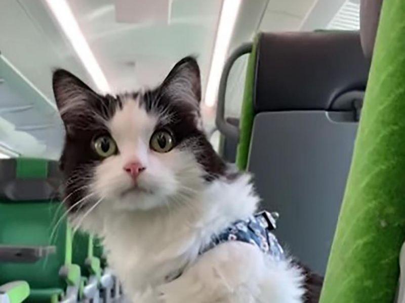 #VIDEO Viaja gato 5 horas en tren y su dueña graba todo el recorrido