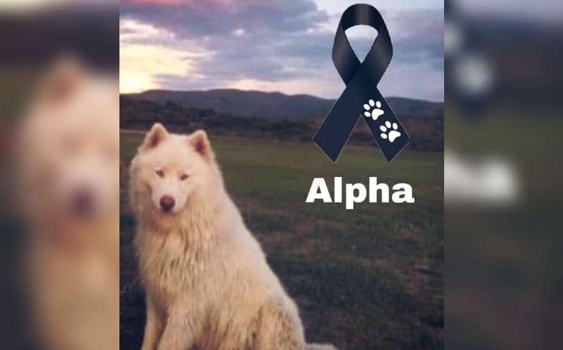 """Las redes piden justicias tras asesinato de """"Alpha"""", un perro amarrado a las vías del tren"""