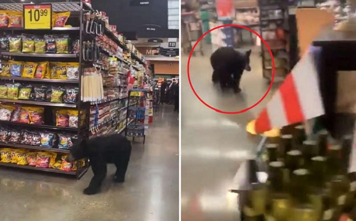 #VIRAL Captan a oso dentro un supermercado en Los Ángeles