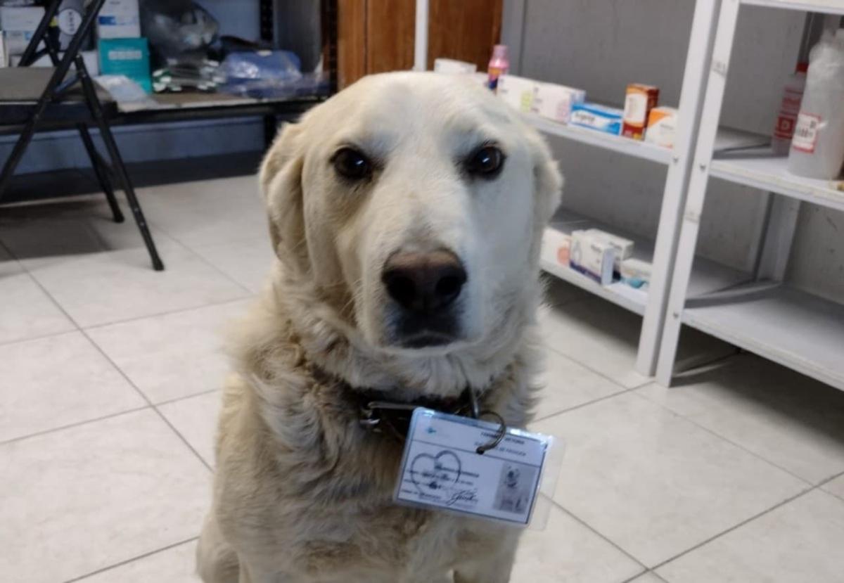 Perrito es contratado en Pachuca como jefe de seguridad en farmacia y hasta gafete le dieron