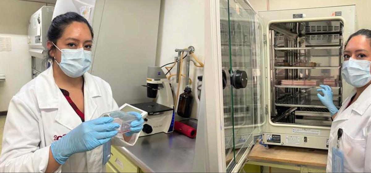 Biofármaco creado por el IPN para tratar covid-19 estará disponible en 2022
