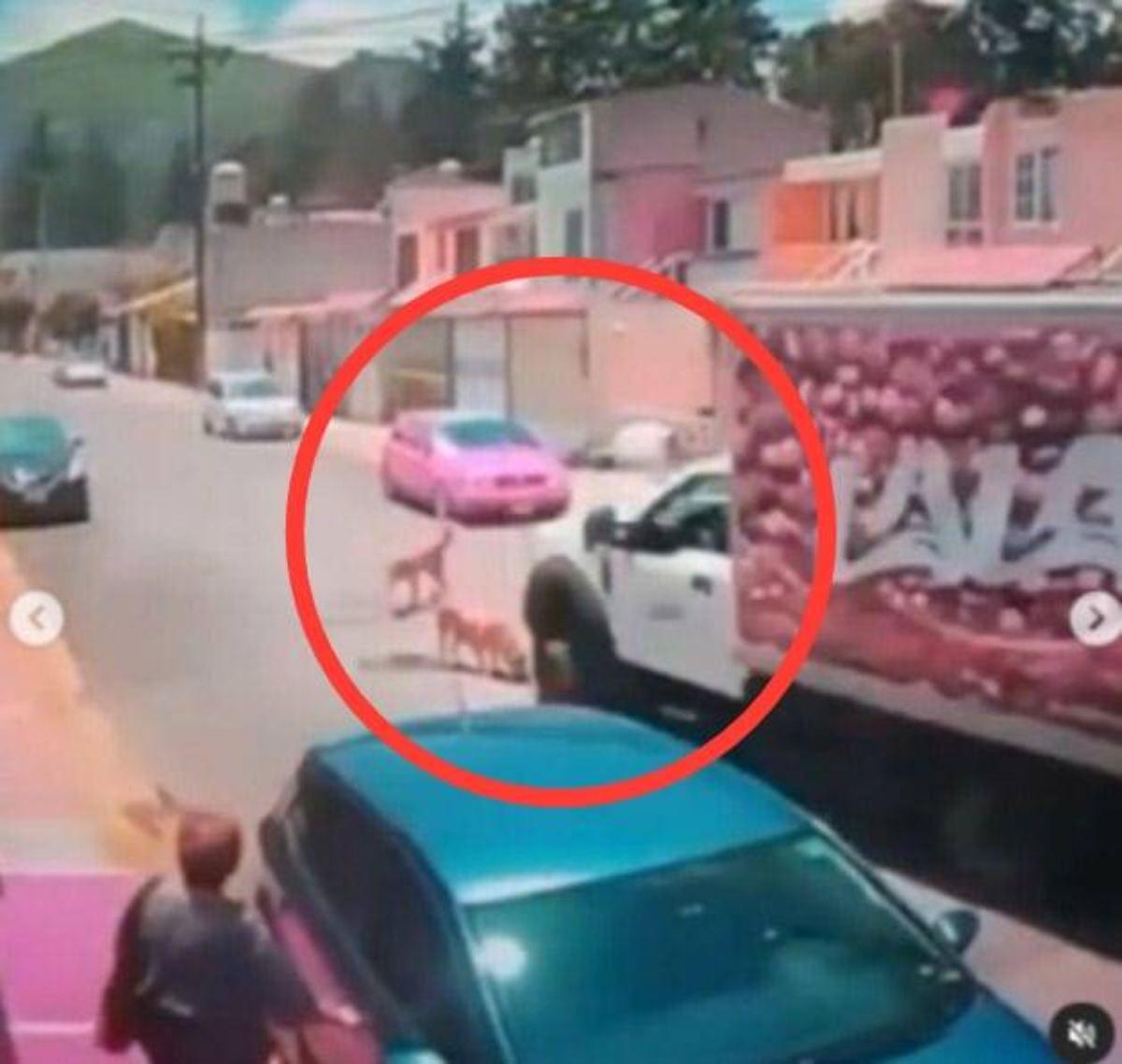 Buscan en redes al responsable de atropellar a lomito con camión de LALA en Tultitlán