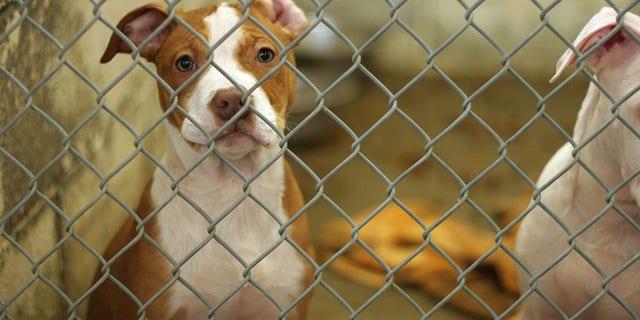 Los perros de un refugio de rescate en Australia fuero matados a tiros debido a las restricciones de covid-19
