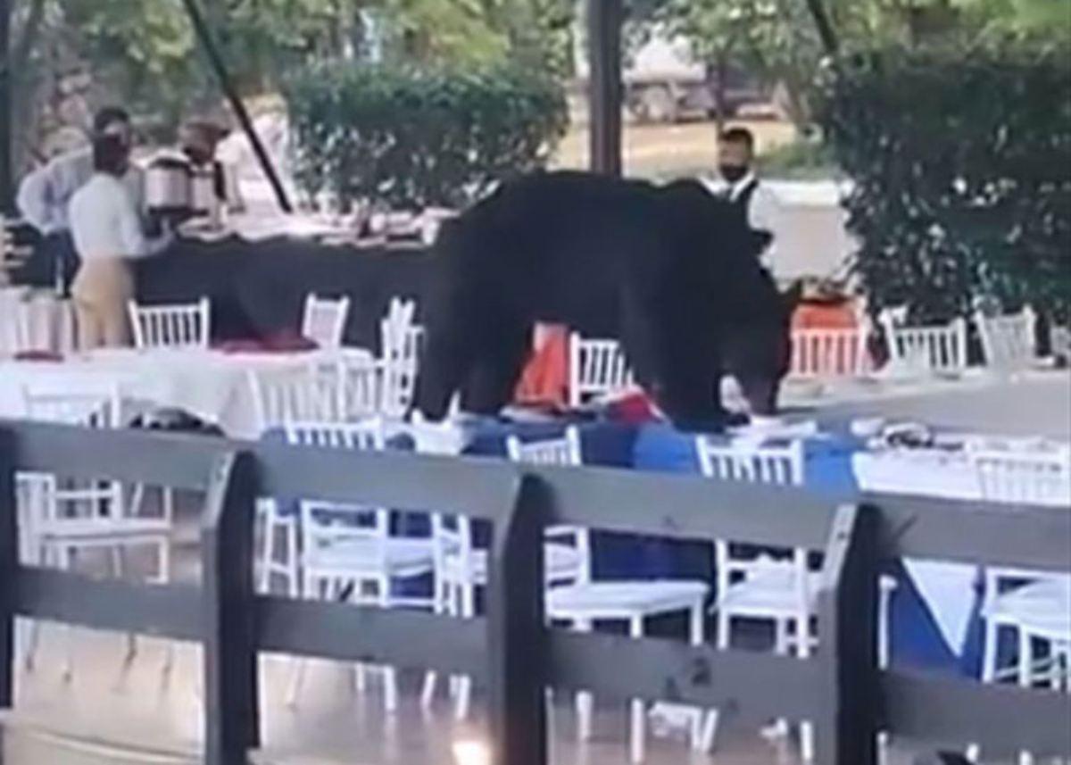 #VIDEO Se cuela oso a fiesta en Nuevo León