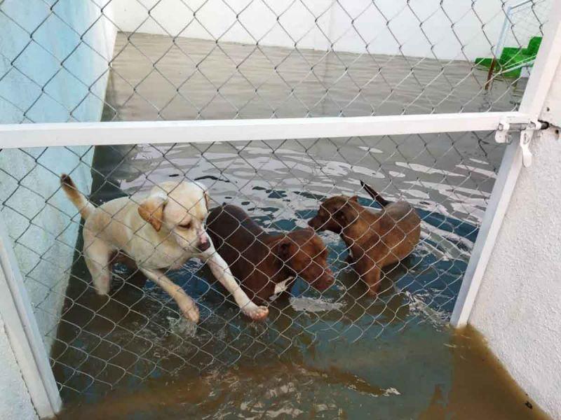 Se inunda albergue de 'lomitos' en Tequisquiapan