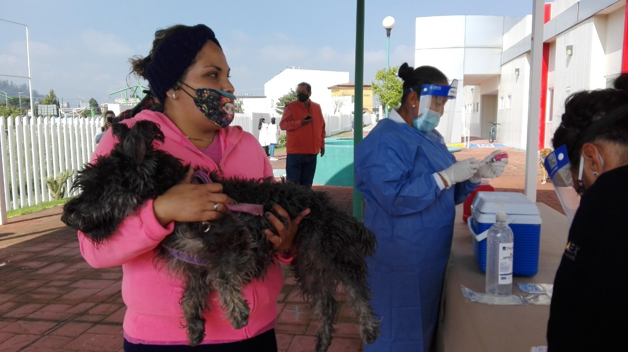 Llama secretaría de salud a la población proteger a perros y gatos contra la rabia
