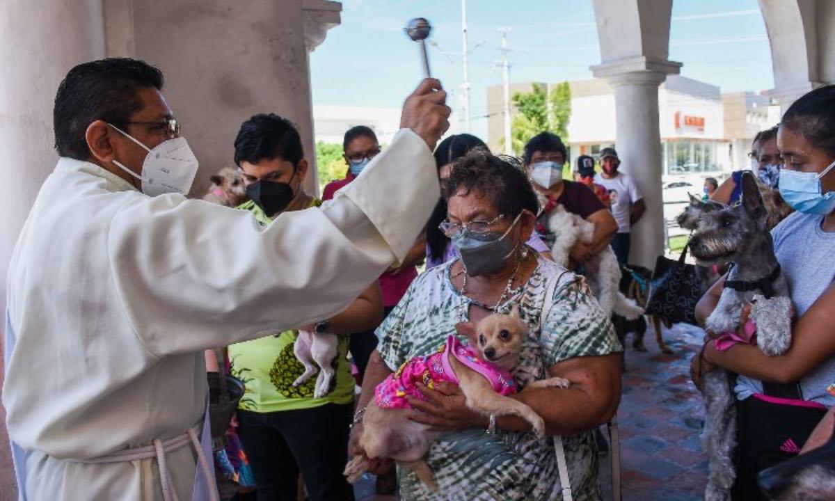 Fieles llevan a sus perritos a bendecir en honor a San Francisco de Asís